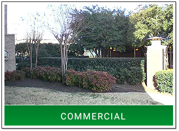Manicured Greenery in Front of Business