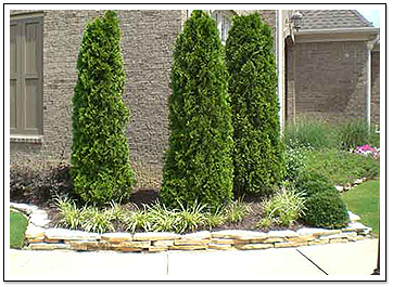 Large Manicured Plants